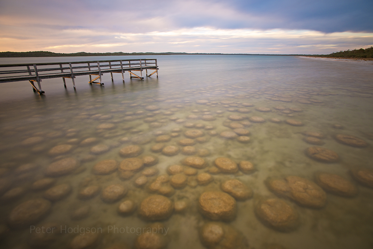 Thrombolites in Perth