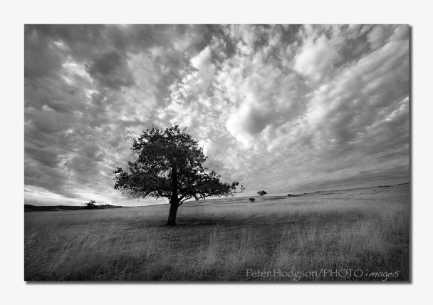 Farm Tree web