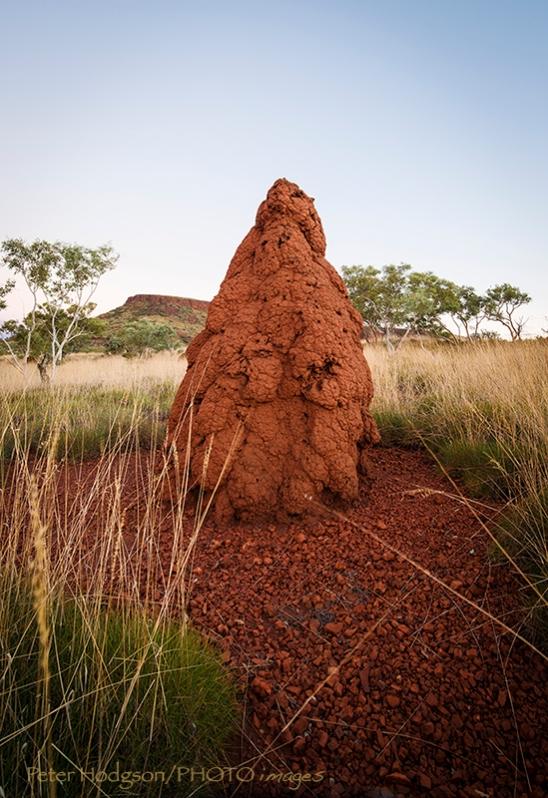 Karajini Termite Mound
